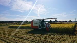 稲刈り_1012