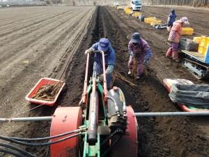 長芋収穫_0408